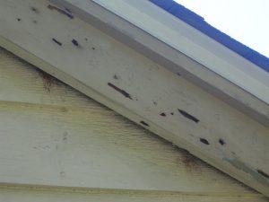 Woodpecker House Damage