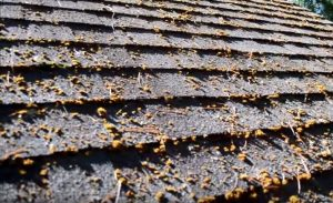 It is important to remove roof moss.