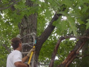 How to cut tree limbs safely.