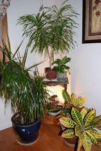 Interior tropical garden