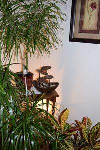Interior tropical garden plants.