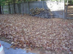 Use a gas leaf blower for this type of leaf pickup.