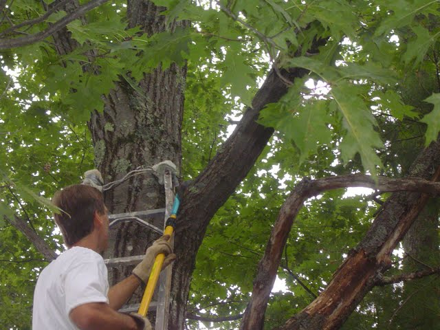 Cutting Tree Limb