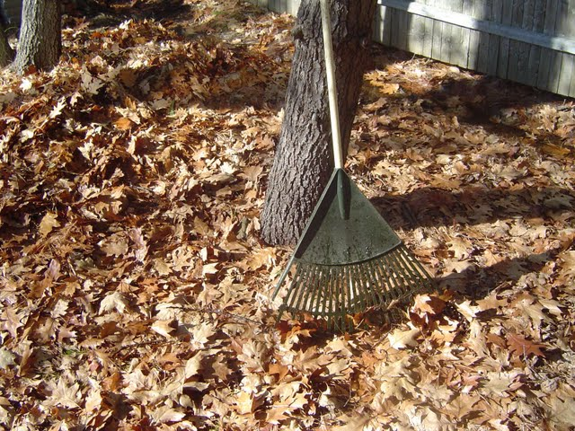 Leaf_Rake the rake know your meme,Raking Leaves Meme