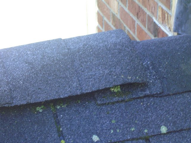 Lichen and Algae on roof shingles